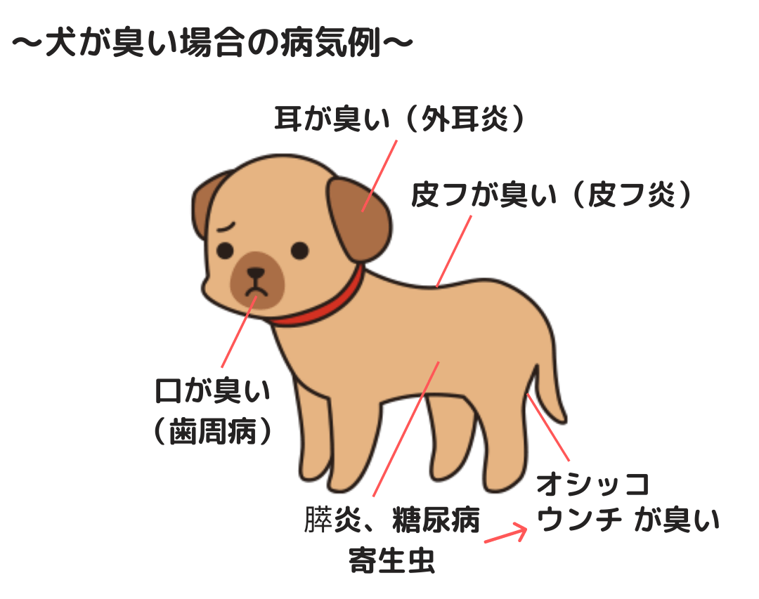 犬が臭い場合の病気例